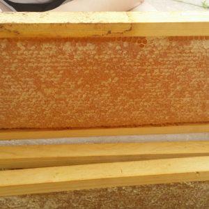 frame-of-capped-honey