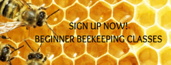 Beginner Beekeeping Classes