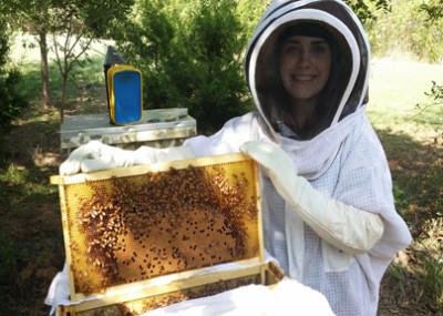 beginner_beekeeping_101_classes