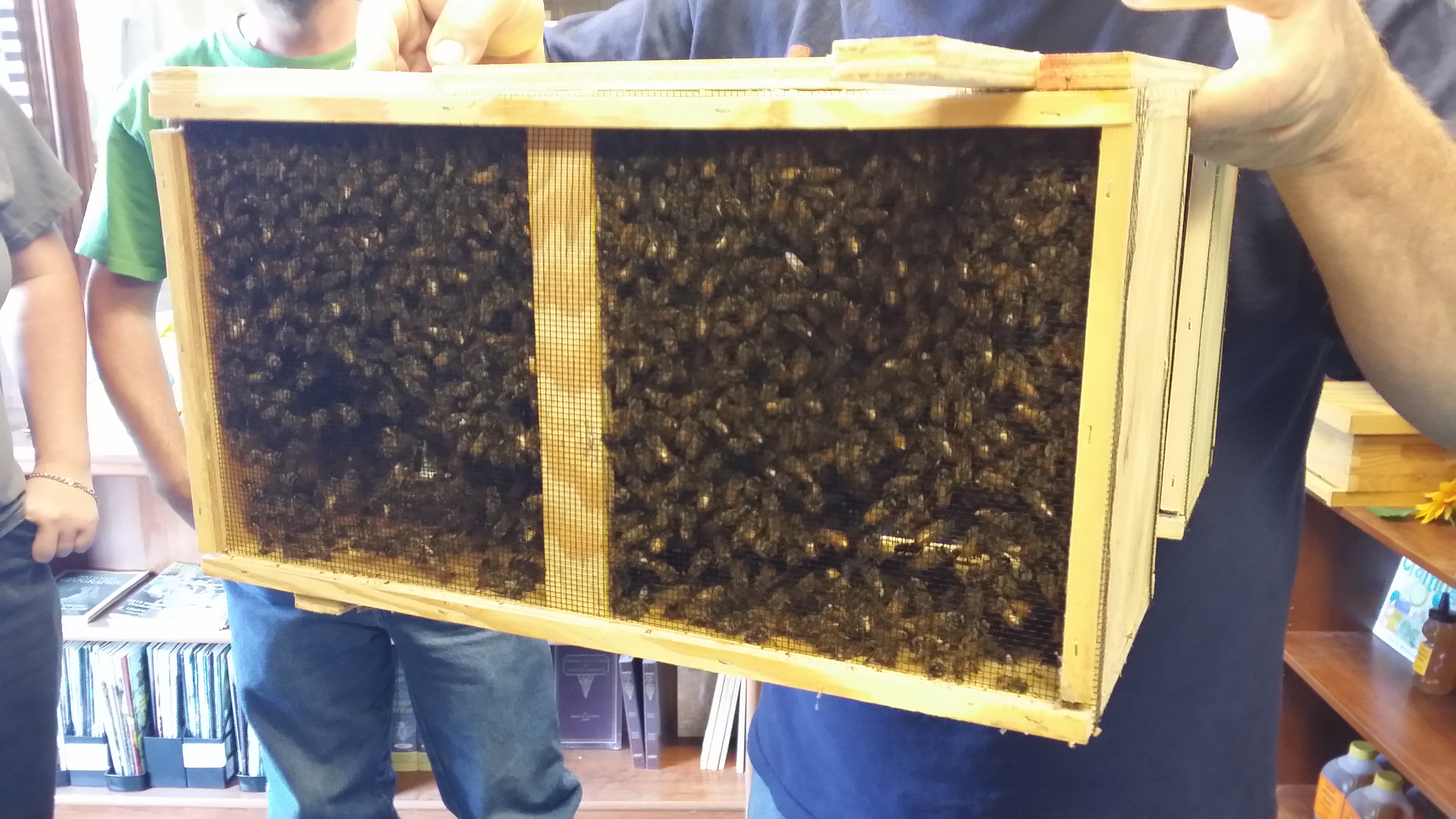 package-of-bees